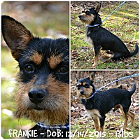 Adopt A Pet :: Frankie - Siler City, NC