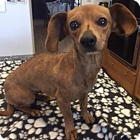 Adopt A Pet :: Tawny - Lancaster, CA
