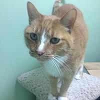 Adopt A Pet :: K.T. - Auburn, CA