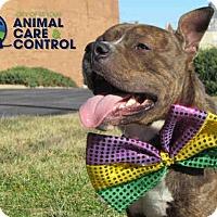 Adopt A Pet :: Vinny - St. Louis, MO