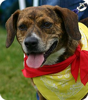 Beagle Buddy | Adopted...