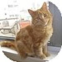 Adopt A Pet :: Van Gogh - Vancouver, BC