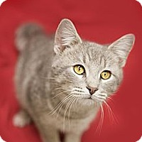 Adopt A Pet :: Angelica - Chicago, IL