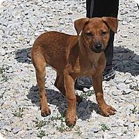 Adopt A Pet :: Ava - Hancock, MI