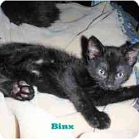 Adopt A Pet :: Binx - Milwaukee, WI