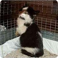 Adopt A Pet :: Thing 1 - Sierra Vista, AZ