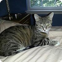 Adopt A Pet :: Carla - Raritan, NJ