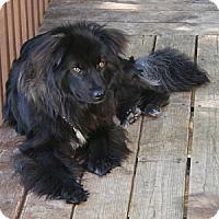 Adopt A Pet :: Jasmine - Rigaud, QC