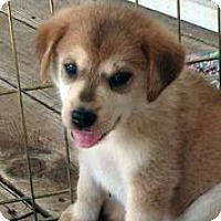 Adopt A Pet :: Hermione - Austin, TX