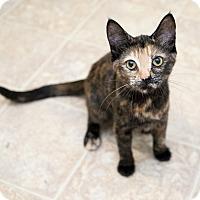 Adopt A Pet :: Posie - Shelton, WA