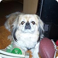 Adopt A Pet :: Gus - Elkhart, IN