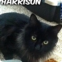 Adopt A Pet :: Harrison - River Edge, NJ