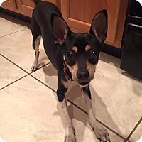 Adopt A Pet :: Ally - S. Pasedena, FL