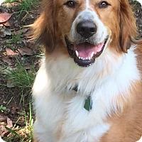 Adopt A Pet :: Beatrice (courtesy listing) - Richmond, VA