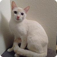 Adopt A Pet :: Lexi - Mesa, AZ