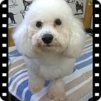 Adopt A Pet :: Pending!! Shiloh-AR - Tulsa, OK