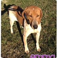 Adopt A Pet :: Emma* - Wilmington, DE