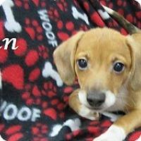 Adopt A Pet :: Finn - Bartonsville, PA