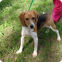 Adopt A Pet :: Cash - Dumfries, VA