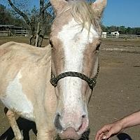 Adopt A Pet :: Sherry - Hitchcock, TX