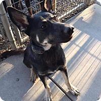 German Shepherd Dog Mix Dog for adoption in Concord, California - Beatrice