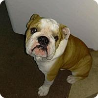 Adopt A Pet :: Bruno - Decatur, IL