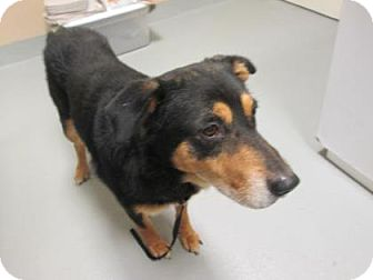 Shepherd (Unknown Type) Mix Dog for adoption in Cumming, Georgia - Boomer