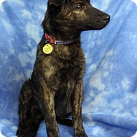 Adopt A Pet :: NIMI - Westminster, CO