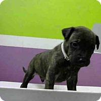 Adopt A Pet :: JETSON - Houston, TX
