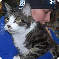 Adopt A Pet :: Philip - Brooklyn, NY