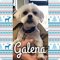 Adopt A Pet :: Galena - Garden City, MI