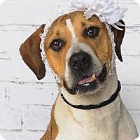 Adopt A Pet :: Annabell - Titusville, FL