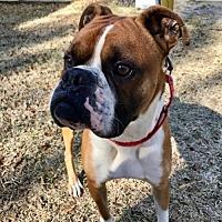 Adopt A Pet :: Trevor - Wilmington, NC