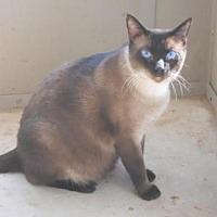Adopt A Pet :: Landon - San Antonio, TX