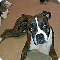 Adopt A Pet :: Bettis - East McKeesport, PA