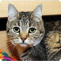 Adopt A Pet :: Abby - Farmingdale, NY