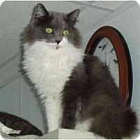 Adopt A Pet :: Minnie - Pascoag, RI