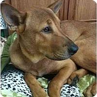 Adopt A Pet :: Strech - Arlington, TX