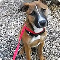 Adopt A Pet :: Sydney - Ft. Lauderdale, FL