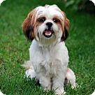 Adopt A Pet :: HAMILTON