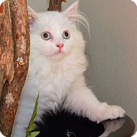 Adopt A Pet :: Fluffbunny - Davis, CA