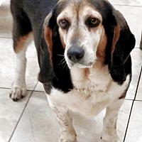 Adopt A Pet :: Maisie Jane - Newark, DE