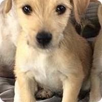 Adopt A Pet :: Monterey - Gainesville, FL
