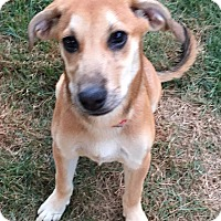 Adopt A Pet :: Melanie IN CT - East Hartford, CT
