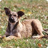 Adopt A Pet :: Howser - San Diego, CA