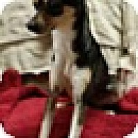 Adopt A Pet :: Lara (DC) - Allentown, PA