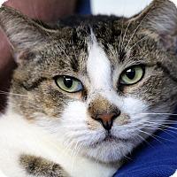 Adopt A Pet :: Donald - Sarasota, FL
