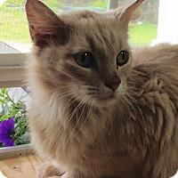 Adopt A Pet :: Clementine - St. Francisville, LA