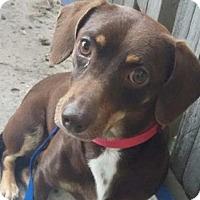 Adopt A Pet :: Shannon - Humble, TX