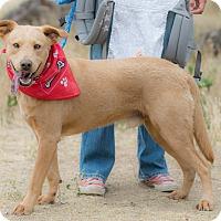 Adopt A Pet :: Gary - Pasadena, CA